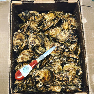 Oysters, Custom Oyster Parties, Calgary's only Custom Oyster Shucker.