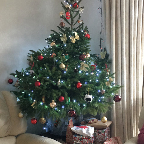 London Christmas Tree Rental Sustainable Pot Grown Farm Return Testimonials