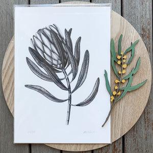 Protea - Limited Edition print by Paula Zetlein