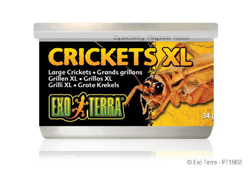 EXO TERRA CANNED CRICKETS XL 34G - City Country Pets and Supplies