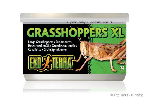 EXO TERRA CANNED GRASSHOPPERS XL 34G - City Country Pets and Supplies
