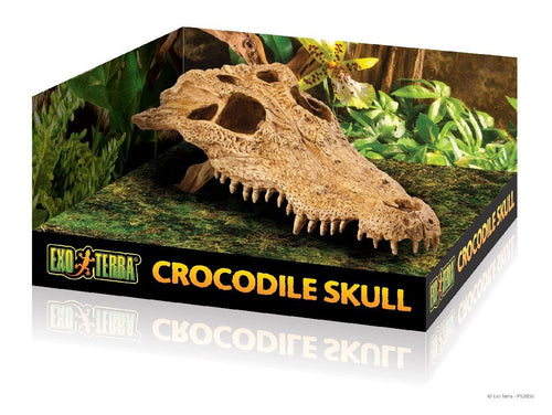 EXO TERRA CROCODILE SKULL HIDE - City Country Pets and Supplies