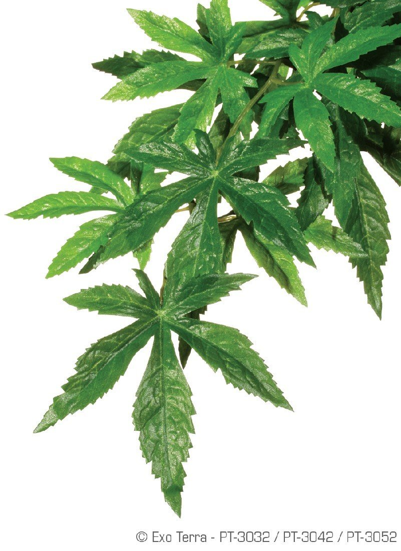 EXO TERRA JUNGLE PLANT ABUTILON MEDIUM SILK - City Country Pets and Supplies