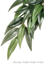 Load image into Gallery viewer, EXO TERRA JUNGLE PLANT RUSCUS MEDIUM SILK - City Country Pets and Supplies