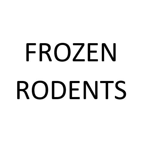 FROZEN MEDIUM RAT 1PK - City Country Pets and Supplies
