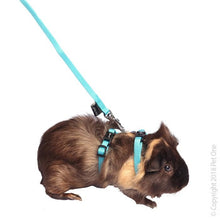 Load image into Gallery viewer, PET ONE LEASH & HARNESS RABBIT, GUINEA PIG, FERRET AQUA - City Country Pets and Supplies