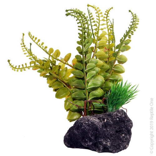 REPTILE ONE FERN WITH PUMICE BASE 14X10X17CM - City Country Pets and Supplies