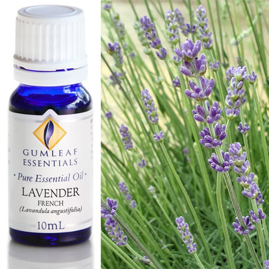 Lavender French Essential Oil