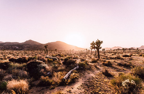 10 Reasons to Love Pioneertown (and Joshua Tree)