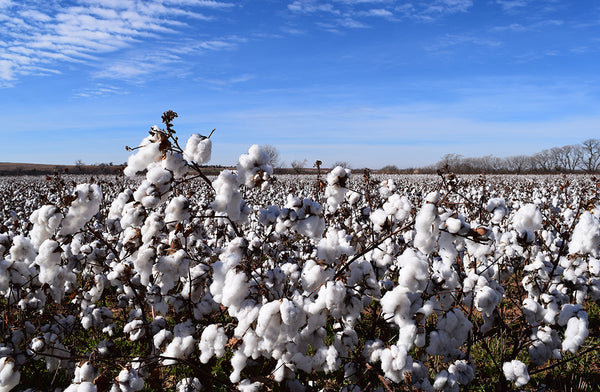 What is Organic Cotton Clothing?