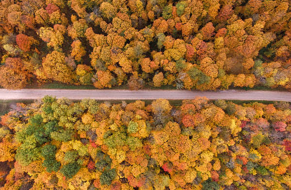 5 Fall Road Trips for Leaf Peeping