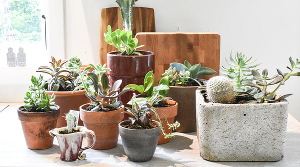 Why Houseplants are Plant-Tastic