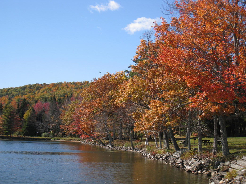 Take a short hike through Moose Point State Park.