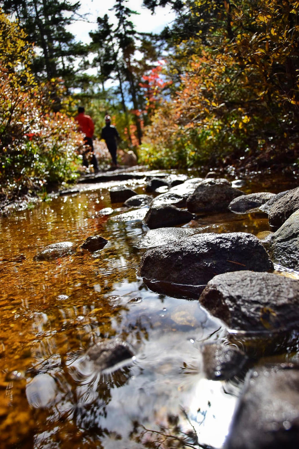 There's plenty to discover when hiking the trails in Portland. Terry Cockburn