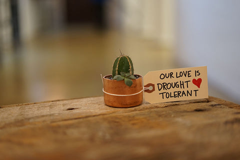 """Succulent with Valentine that reads """"Our love is drought tolerant"""""""