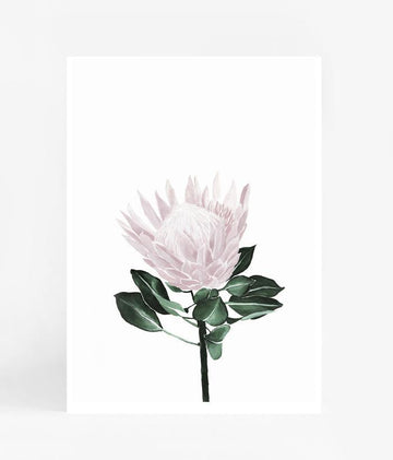 Protea - Pink