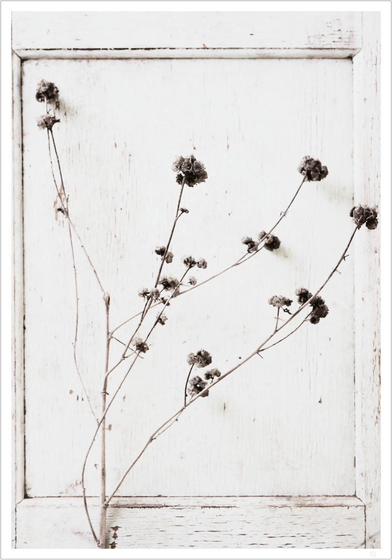 Monochrome flower poster