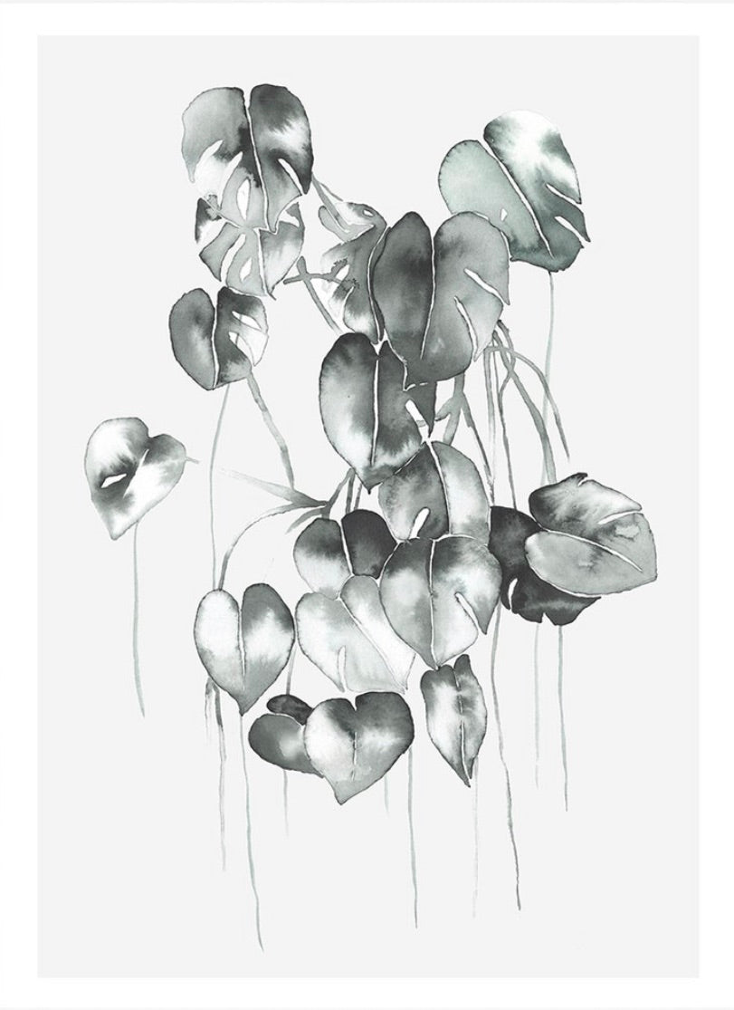 Philodendron - Print