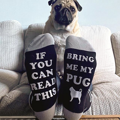 Pug with a pair of bring me my pug socks