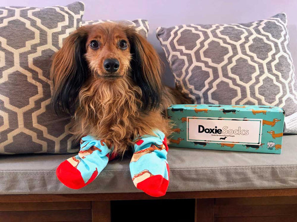 It's a summer Sock Doggo giveaway! Enter to win!