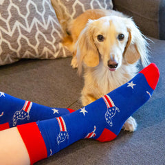 Dachshund with a pair of stars and stripes socks
