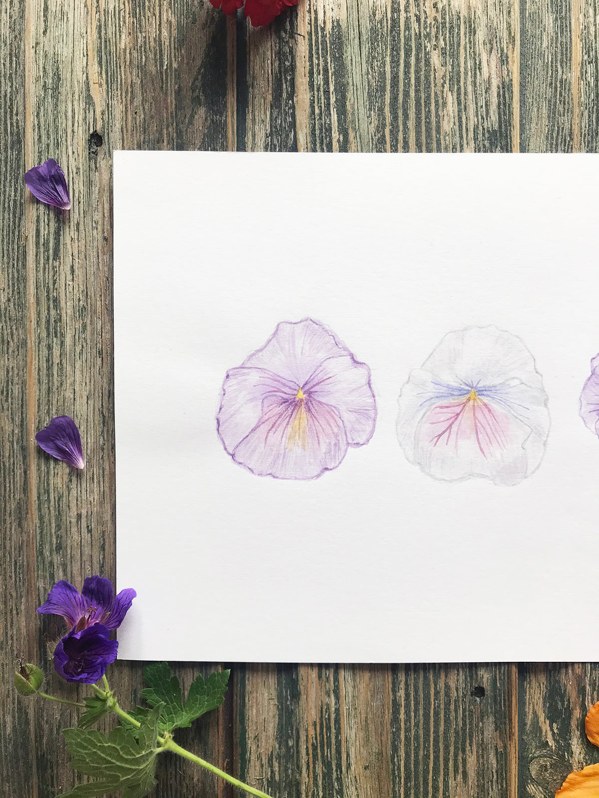Violas ~ Original Drawing