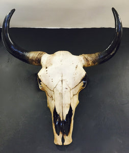 Wall Mounted Bison Skull Extra Large