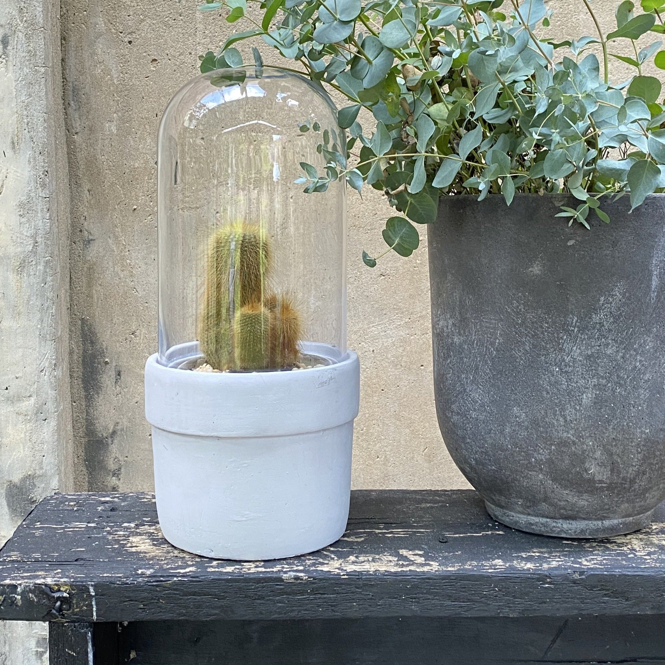 Concrete Planter with Glass Dome