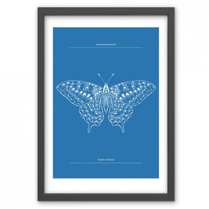 Swallowtail Butterfly Print