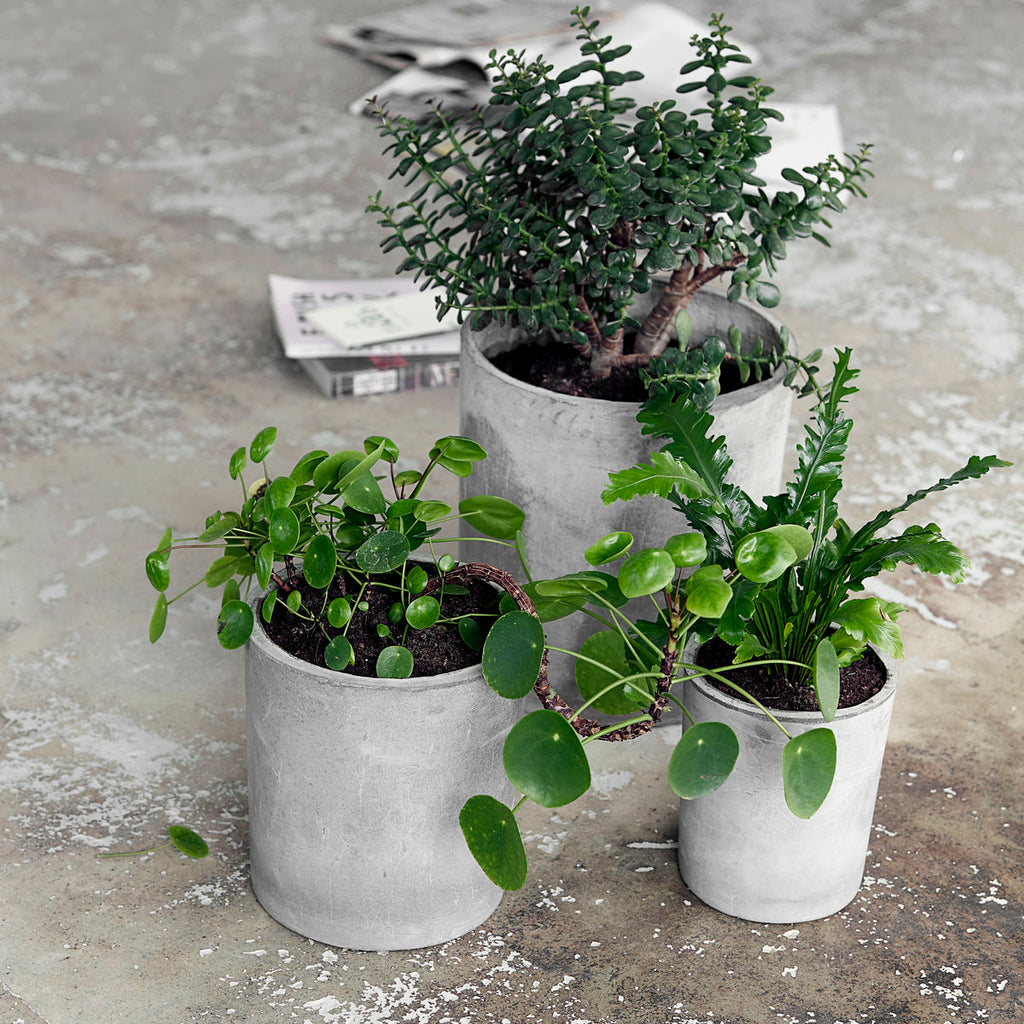 Ave Concrete Planter Set