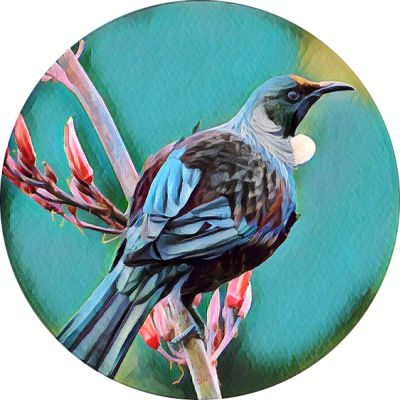 NEW ZEALAND BIRDS Coasters