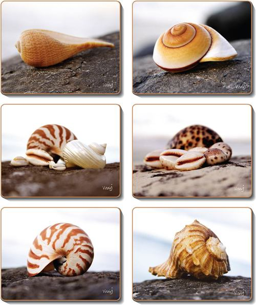 SEASHELLS Coasters or Placemats