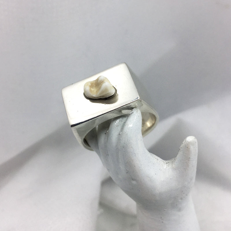 Tooth Signet Ring  - Custom made