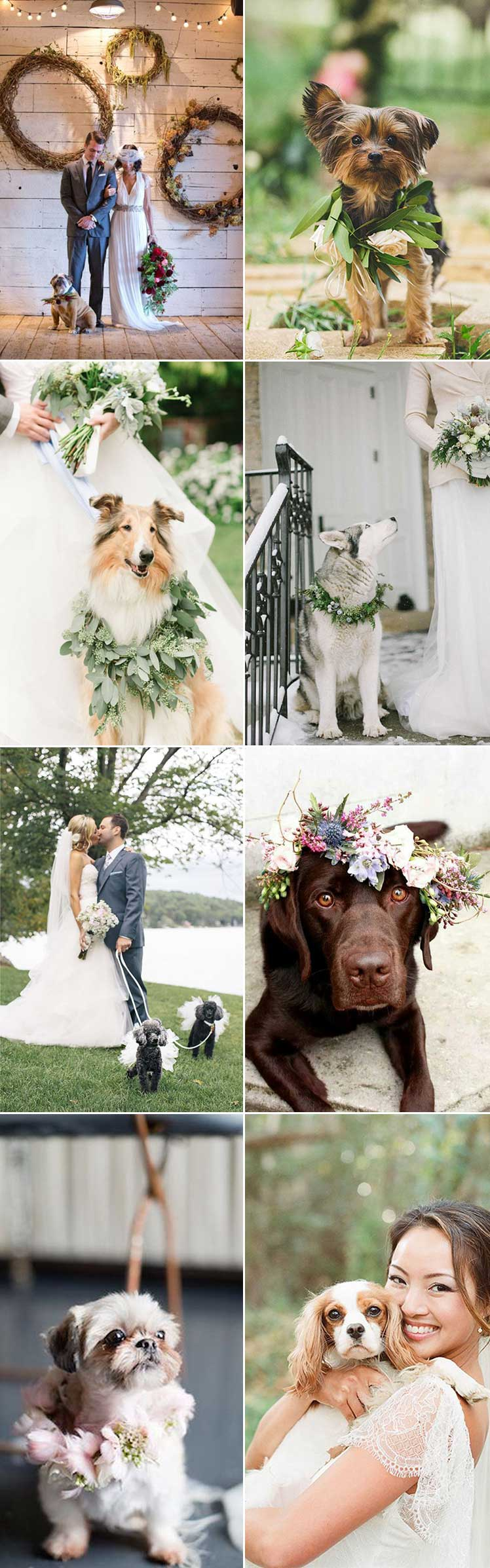 Including your dog in your wedding day