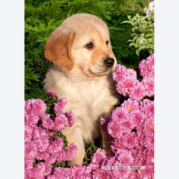 Little golden retriever - 260 stukjes