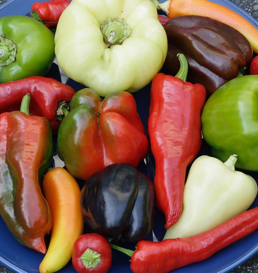 About Peppers
