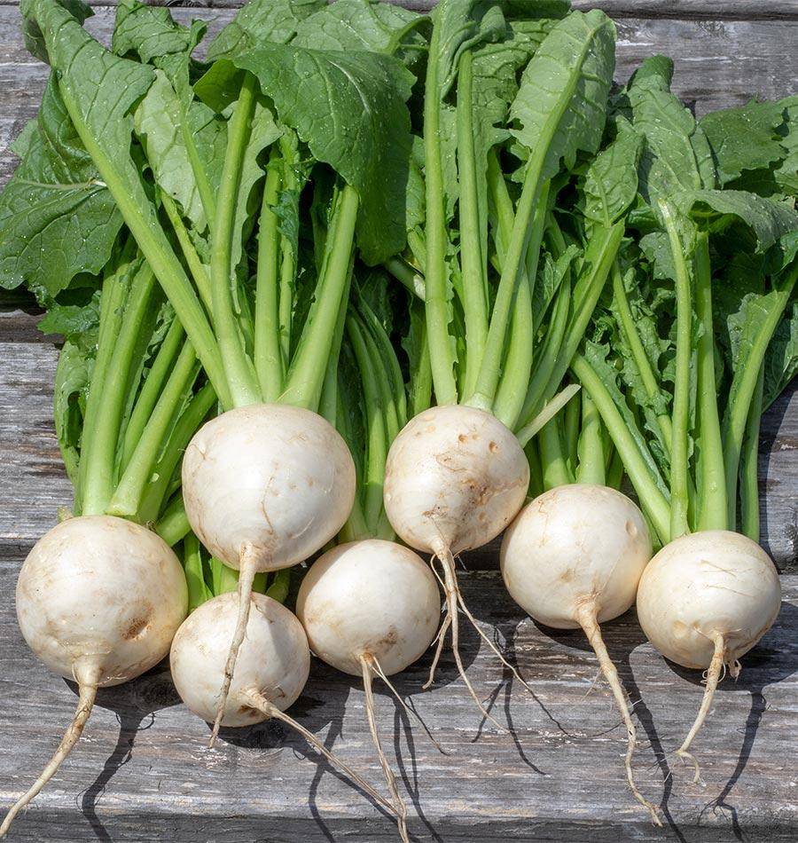 About Turnips