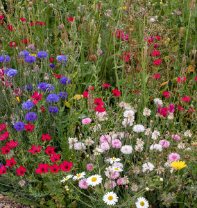 Biodiversity Blend Wildflowers Ingredients