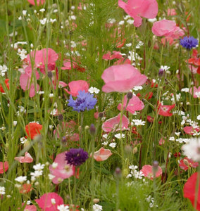 Knee High Meadow Blend Wildflower Ingredients