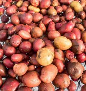 How to Grow Potatoes from Seed