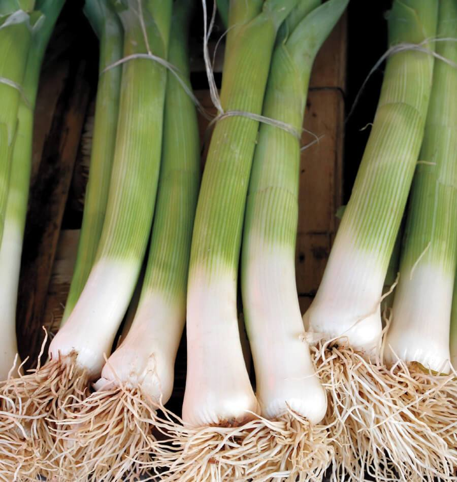 About Leeks