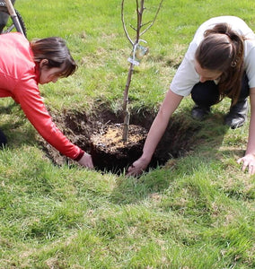 Commit to Grow Day 15: Planting Trees