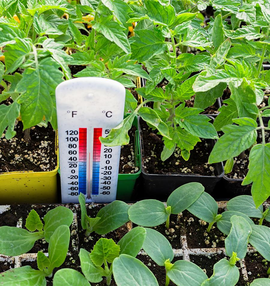 Soil Temperature and Day Length