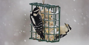 Suet Feeders: A Gift for the Birds