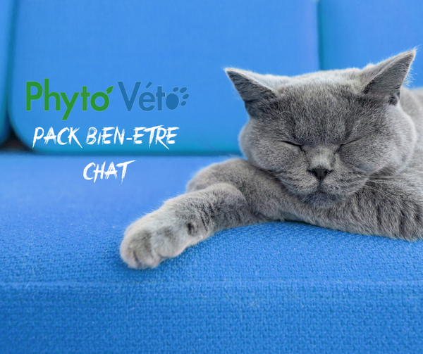 Pack articulaire chat