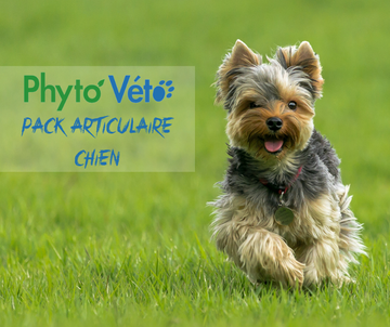 Pack Articulaire Chien