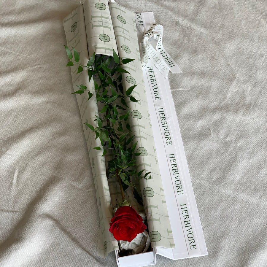 A single red rose presented in a white gift box.