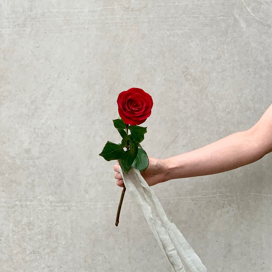 A single red rose.