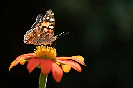 Macro photograph of a butterfly by Jerred Zegelis