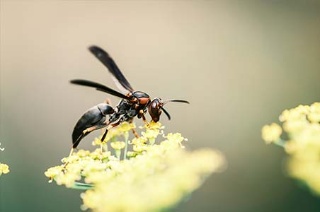 Macro image of a wasp on a flower by Jerred Zegelis